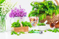 Homeopathy medicines and healthy plants Royalty Free Stock Images