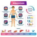Homeostasis vector illustration. Labeled educational glucose example scheme Royalty Free Stock Photo