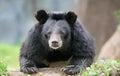 Honey bear on come closer zoo Stock Photo