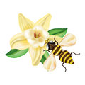 Honey bee with flower isolated on white background Stock Photos