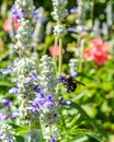 Honey bee on flower in the spring meadow. Seasonal natural scene. Royalty Free Stock Photo