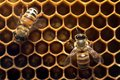 Honey Bee on the hive in Southeast Asia. Royalty Free Stock Photo