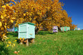 Honey bee hives in autumnal apple garden Stock Image
