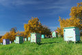 Honey bee hives in autumnal apple garden Stock Photography