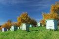 Honey bee hives in autumnal apple garden Stock Photography