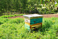 Honey bee hives in spring garden Royalty Free Stock Photo