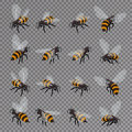 Honey bee vector set on a transparent background. Flat 3d vector isometric illustration. Honey natural healthy food Royalty Free Stock Photo