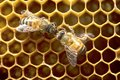 Honey Bees on bee hive in Thailand and Southeast Asia. Royalty Free Stock Photo
