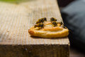 Honey bees sitting on cookie Royalty Free Stock Photo