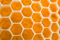 Honey cells Stock Photo