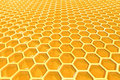 Honey cells Royalty Free Stock Photography