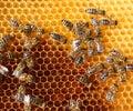 Miele pettine e api