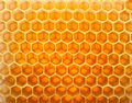 Honey in comb Royalty Free Stock Photo