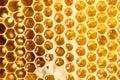 Honey in frame