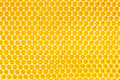Honey in honeycomb background Royalty Free Stock Photo