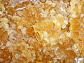 Honey from honeycombs. Royalty Free Stock Photos