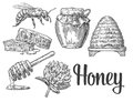 Honey set. Jars of honey, bee, hive, clover, honeycomb. Vector vintage engraved illustration.
