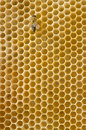 Honeybee on a comb Royalty Free Stock Images