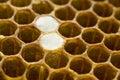 Honeycomb 008 Stock Photos