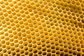 Honeycomb Royalty Free Stock Image