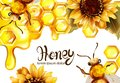 Honeycomb banner watercolor illustration. sunflower and bees Vector templates Royalty Free Stock Photo