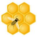 Honeycomb and bee Royalty Free Stock Image