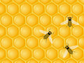 Honeycomb and bees Stock Photo
