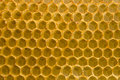 Honeycomb fo honey closeup macro background. Stock Image