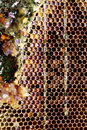 Honeycomb frame full with fresh dripping honey Stock Photo