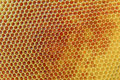 HoneyComb Royalty Free Stock Photo
