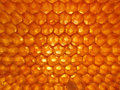 Honeycomb hexagon matrix made by the bees Royalty Free Stock Image