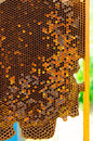 Honeycomb in hive with wax Stock Images