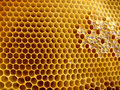 Honeycomb shapes Stock Photography