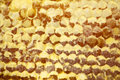 Honeycombs Stock Photography