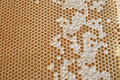 Honeycombs filled with honey texture Royalty Free Stock Image