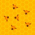Honeycombs with Honey Bees Royalty Free Stock Photo