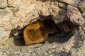 Honeycombs of wild bees in the cave at the mountains Royalty Free Stock Photo