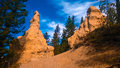Hoodoos tree forest banff valley photoshop color filter Stock Photos