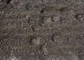 Hoof prints in the Dirt Royalty Free Stock Photo