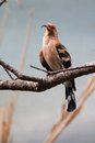 Hoopoe sitting on a branch Stock Image