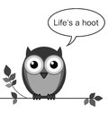 Hoot life is a owl message isolated on white background Royalty Free Stock Photography