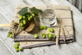 Hop flowers wheat ears and seeds water ingredients for brewing beer on wooden table Stock Photography