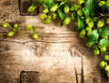 Hop plant border design. Twigs of hops over wooden cracked table