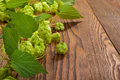 Hop plant on a wooden table Royalty Free Stock Photo