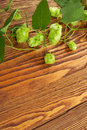 Hop plant on a wooden table Royalty Free Stock Images