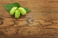 Hop plant on a wooden table Stock Image