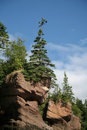 Hopewell Rocks, New Brunswick Royalty Free Stock Photography