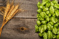 Hops and golden ripe wheat Royalty Free Stock Photo