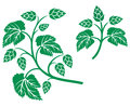 Hops leaf design plant hop symbol hop leaves hop branch Stock Images