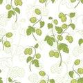 Hops plant graphic color sketch seamless pattern illustration